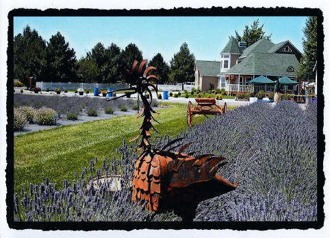 Victorian Farm House at Purple Ridge Lavender Farm